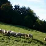 Vánoce - pasení ovcí v Beskydech